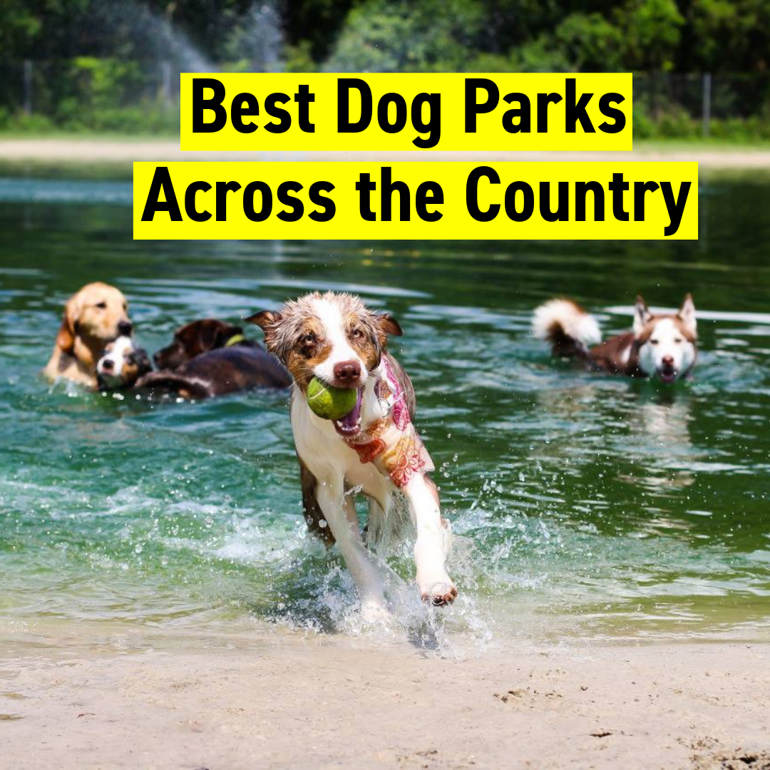 Best Dog Parks Across the Country