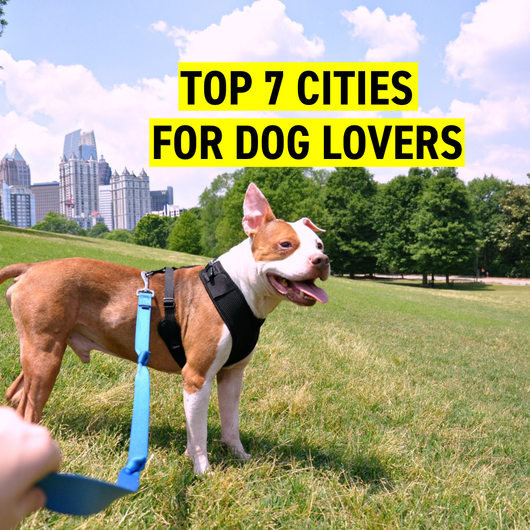 Top 7 Cities in 2019 for Dog Lovers