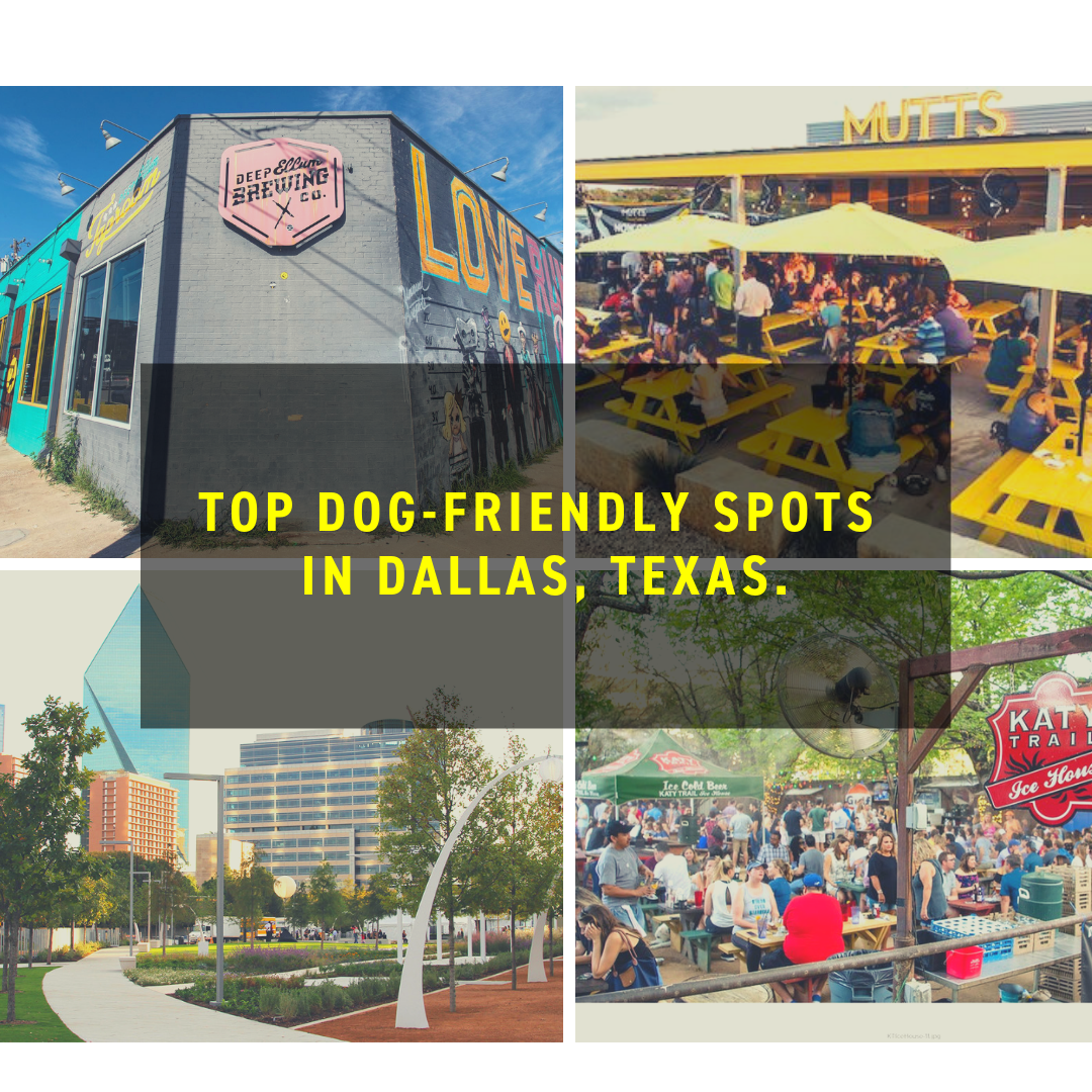 Dog-Friendly Dallas, Texas