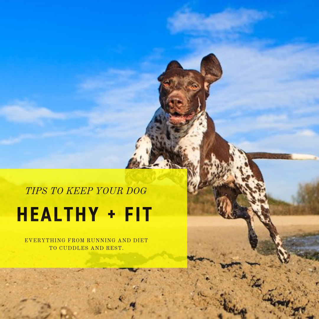 Tips For Keeping Your Dog Healthy + Fit.