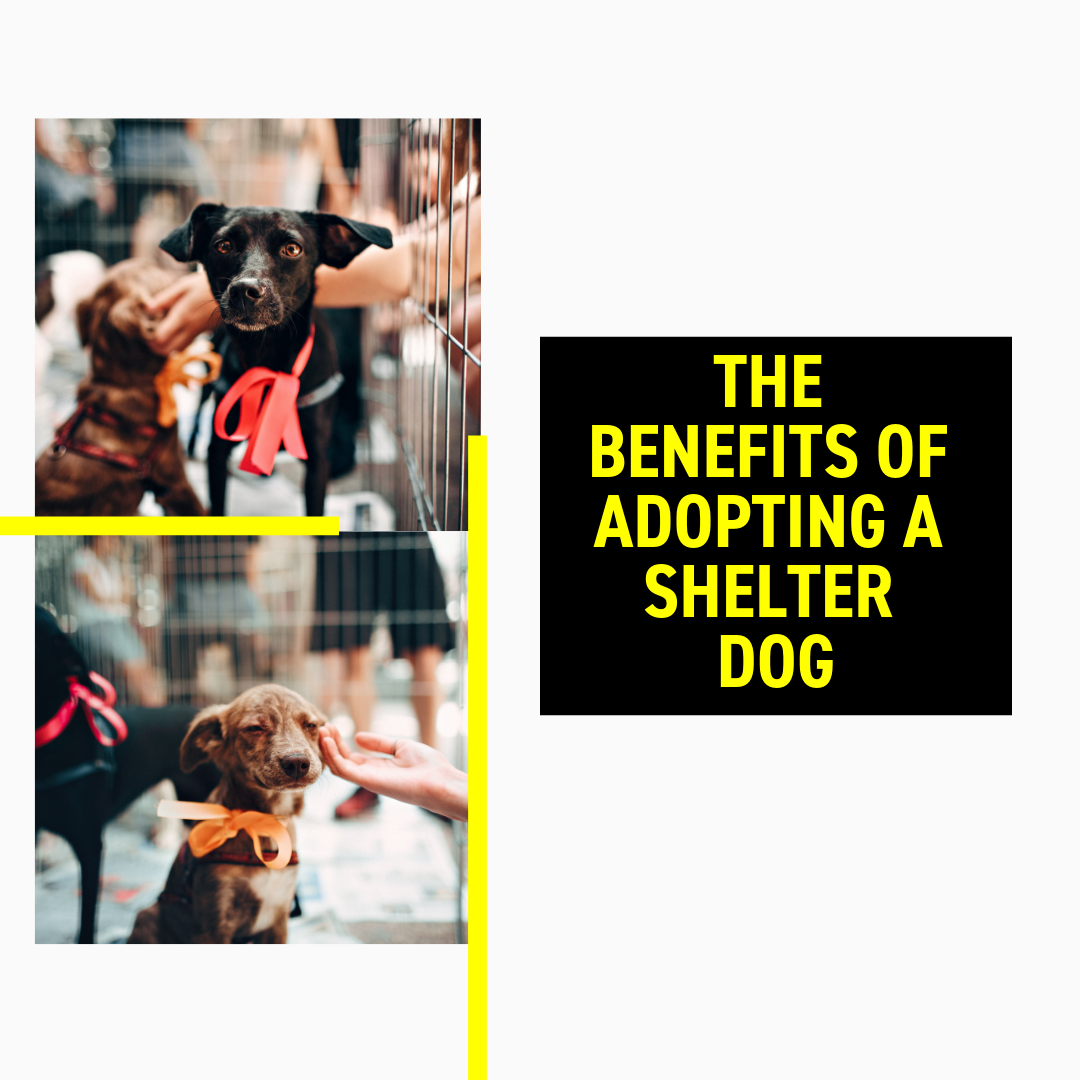 The Benefits of Adopting a Shelter Dog
