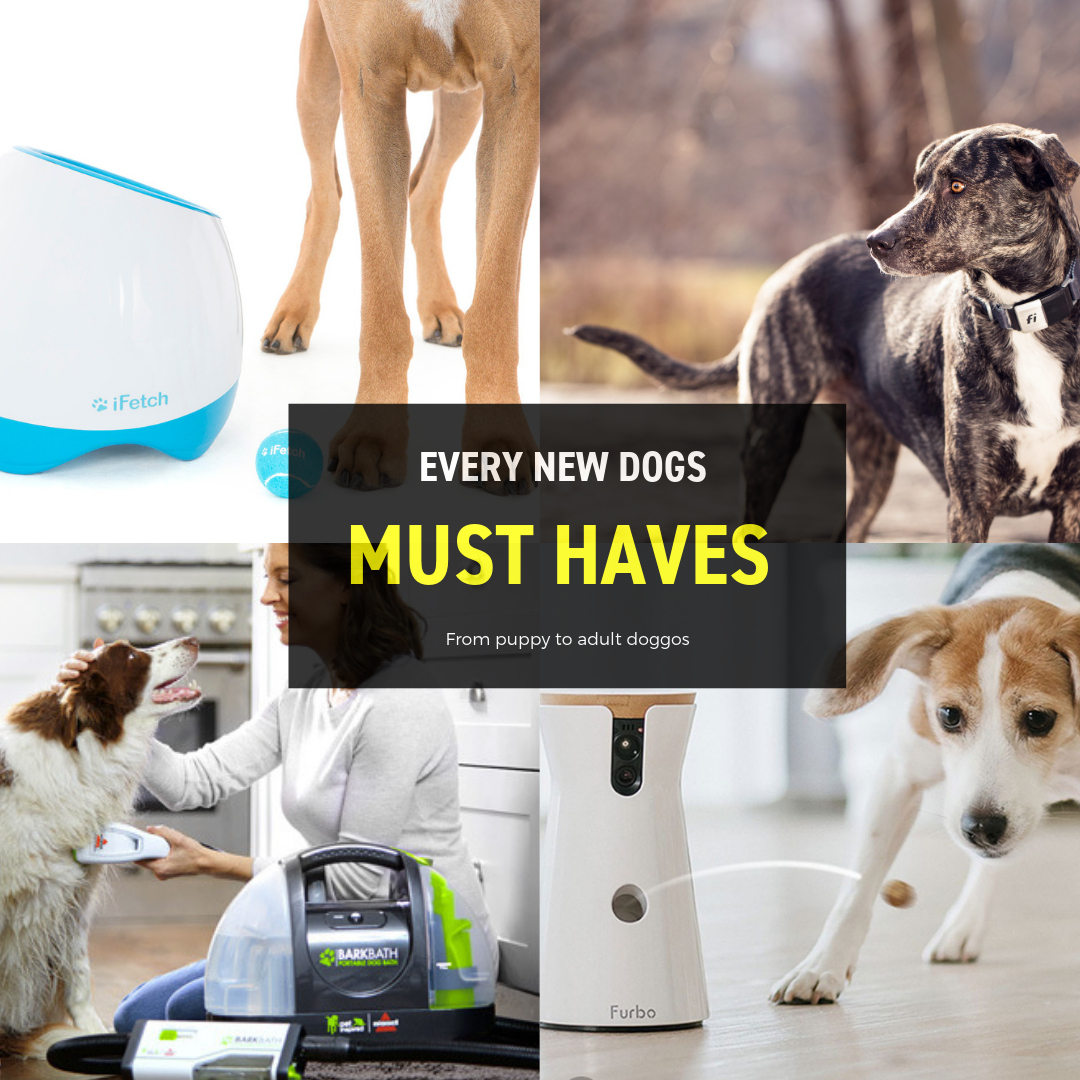 Every New Dogs Must-Haves