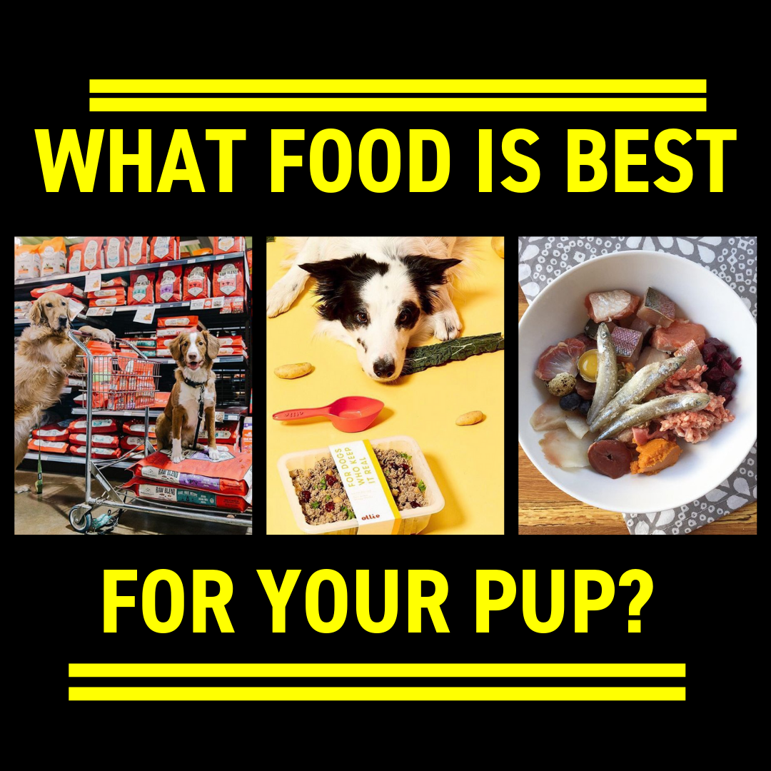 What Food Is Best For Your Pup?