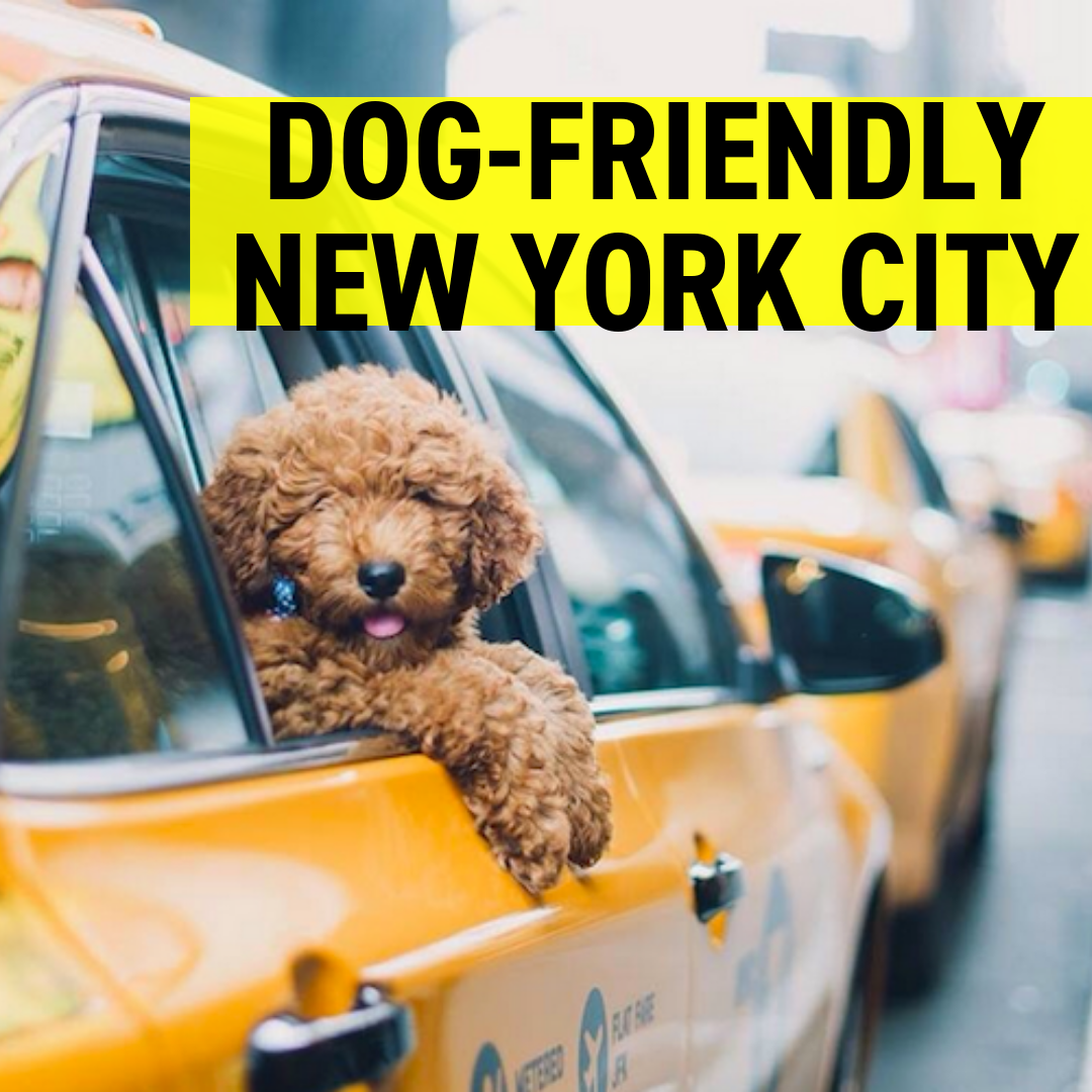 Dog-Friendly NYC