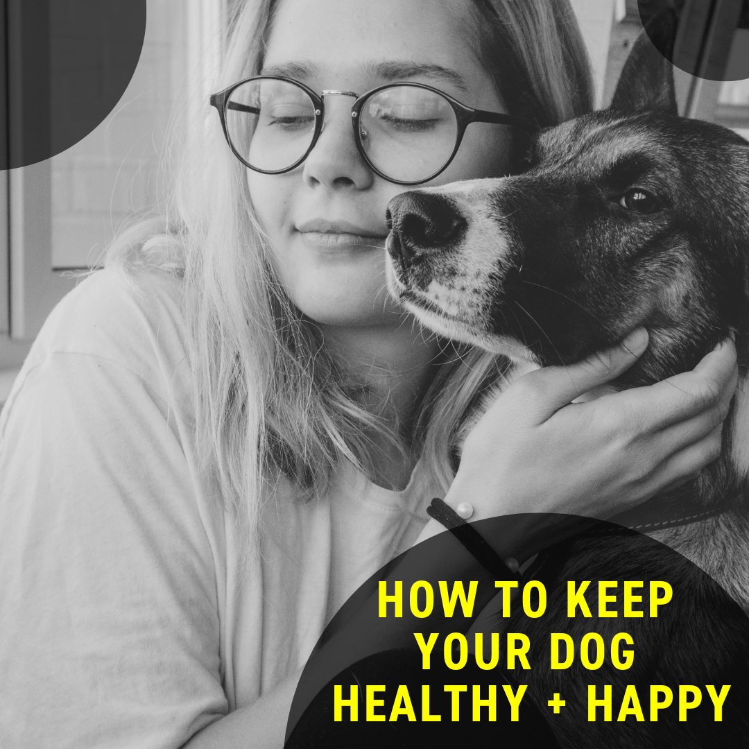 How To Keep Your Dog Healthy + Happy
