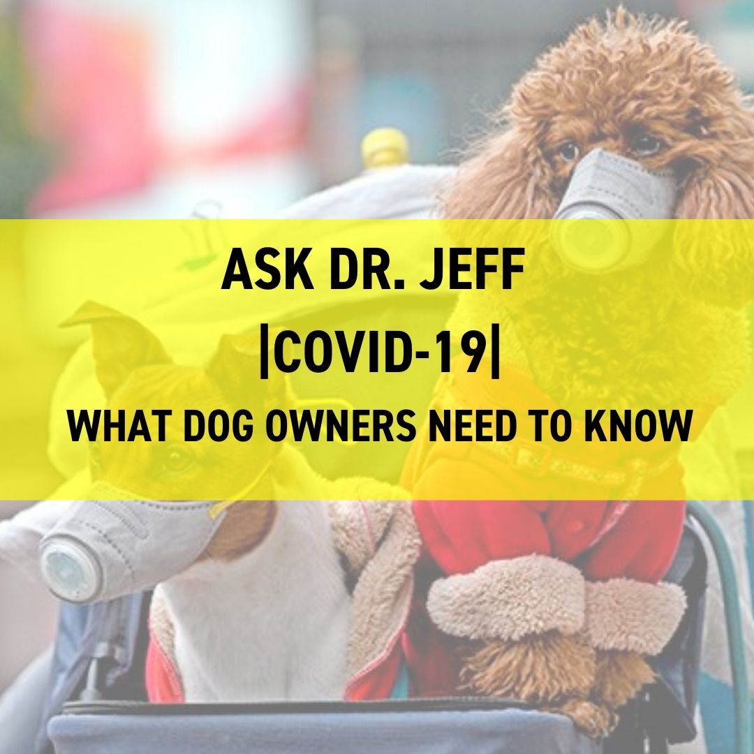 COVID-19 - What Dog Owners Need To Know