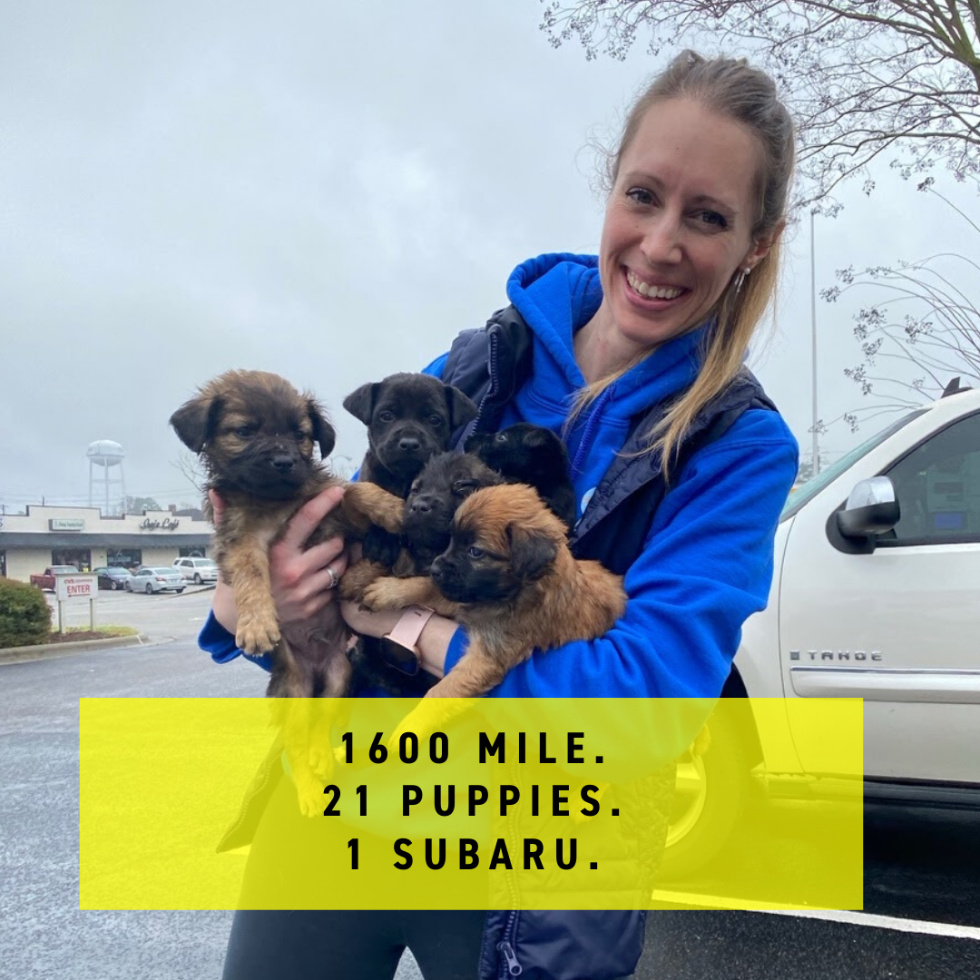 1600 miles, 21 puppies, 1 Subaru.