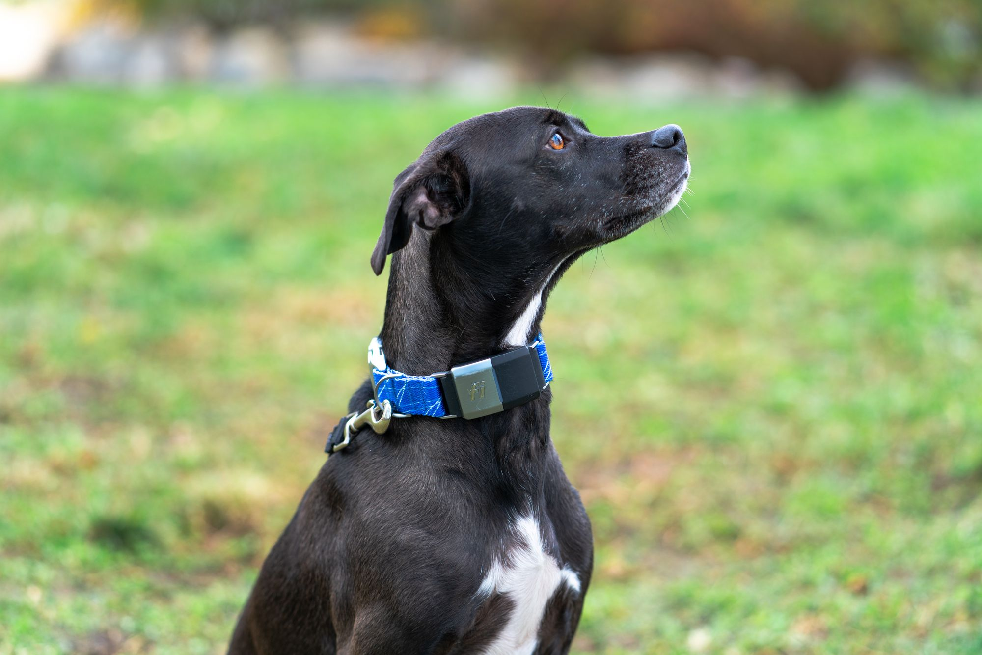 Ask Dr. Jeff: Is A GPS Collar Safe For My Dog?