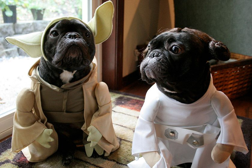 Quiz: Star Wars Character or Rare Dog Breed?