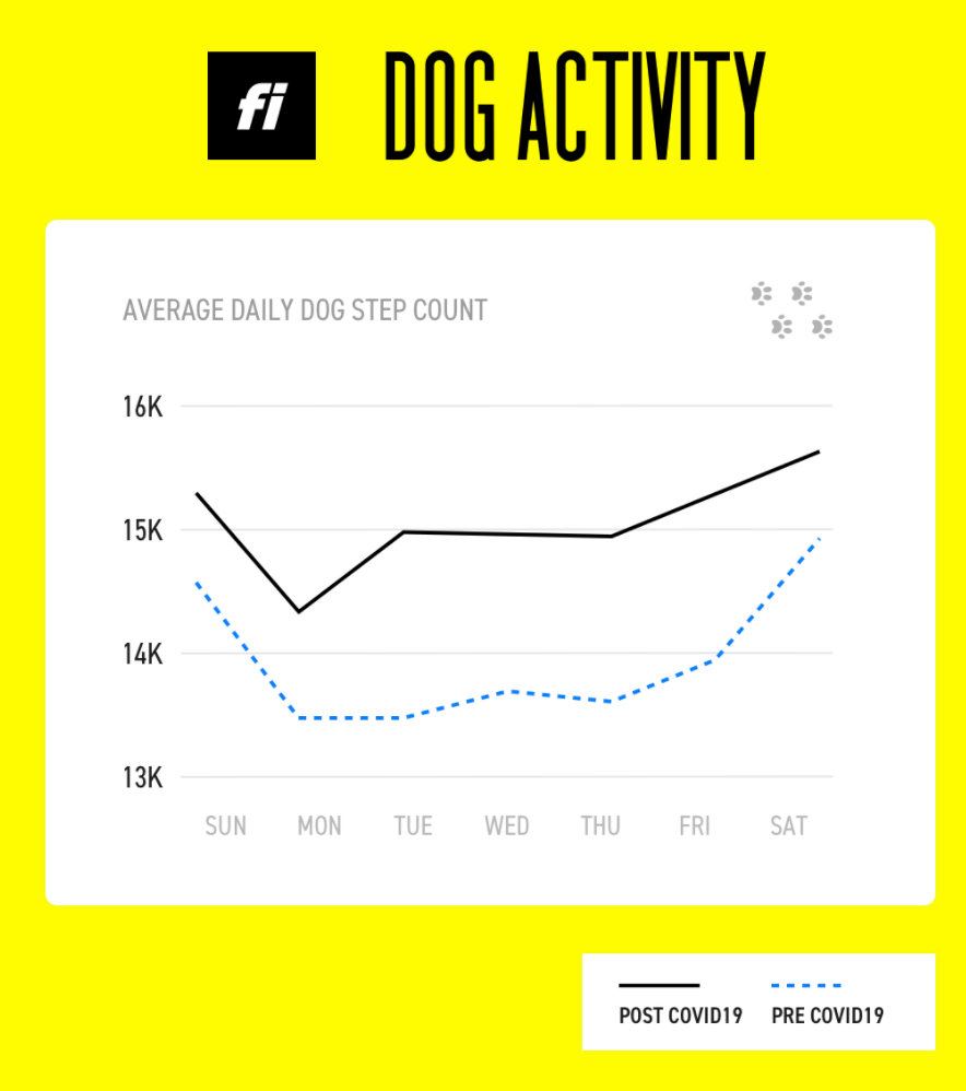 Dogs Are More Active Now Than Ever.