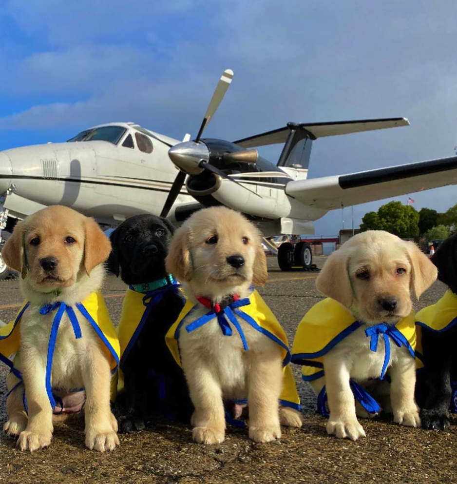 Flying Puppies? Not What You Think, But Still Very Cute.