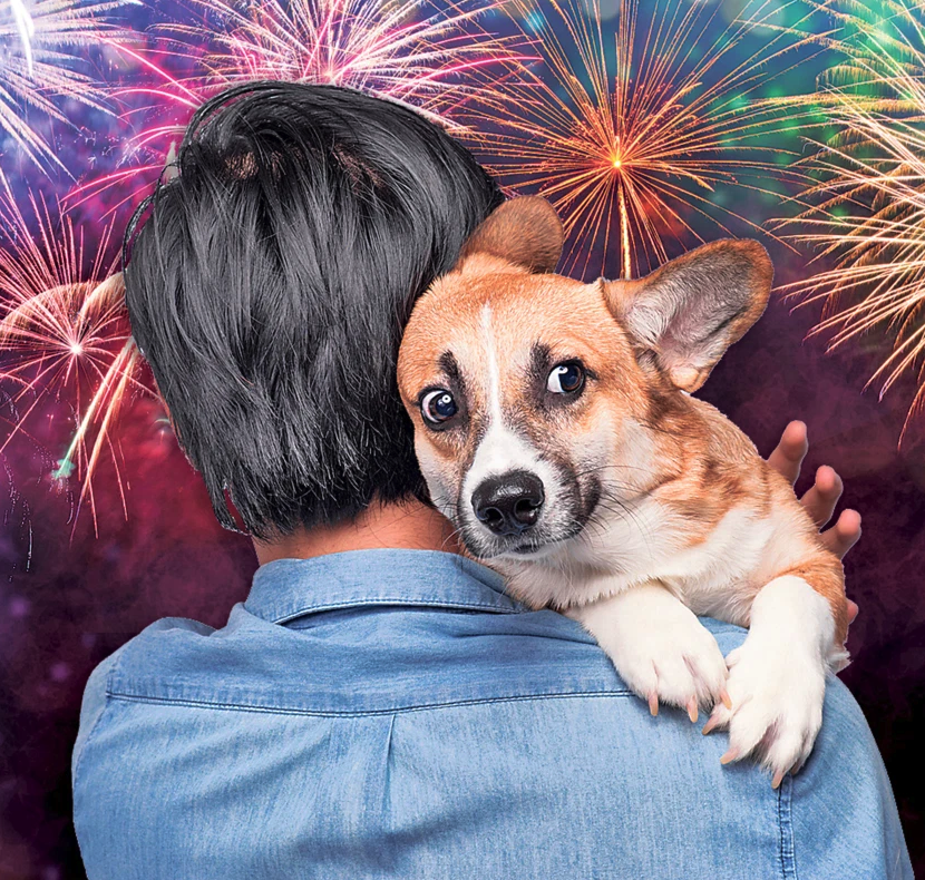 How To Keep Dogs Safe During 4th Of July