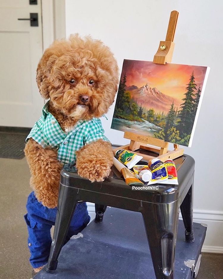 Is That Bob Ross? No, It's A Dog.