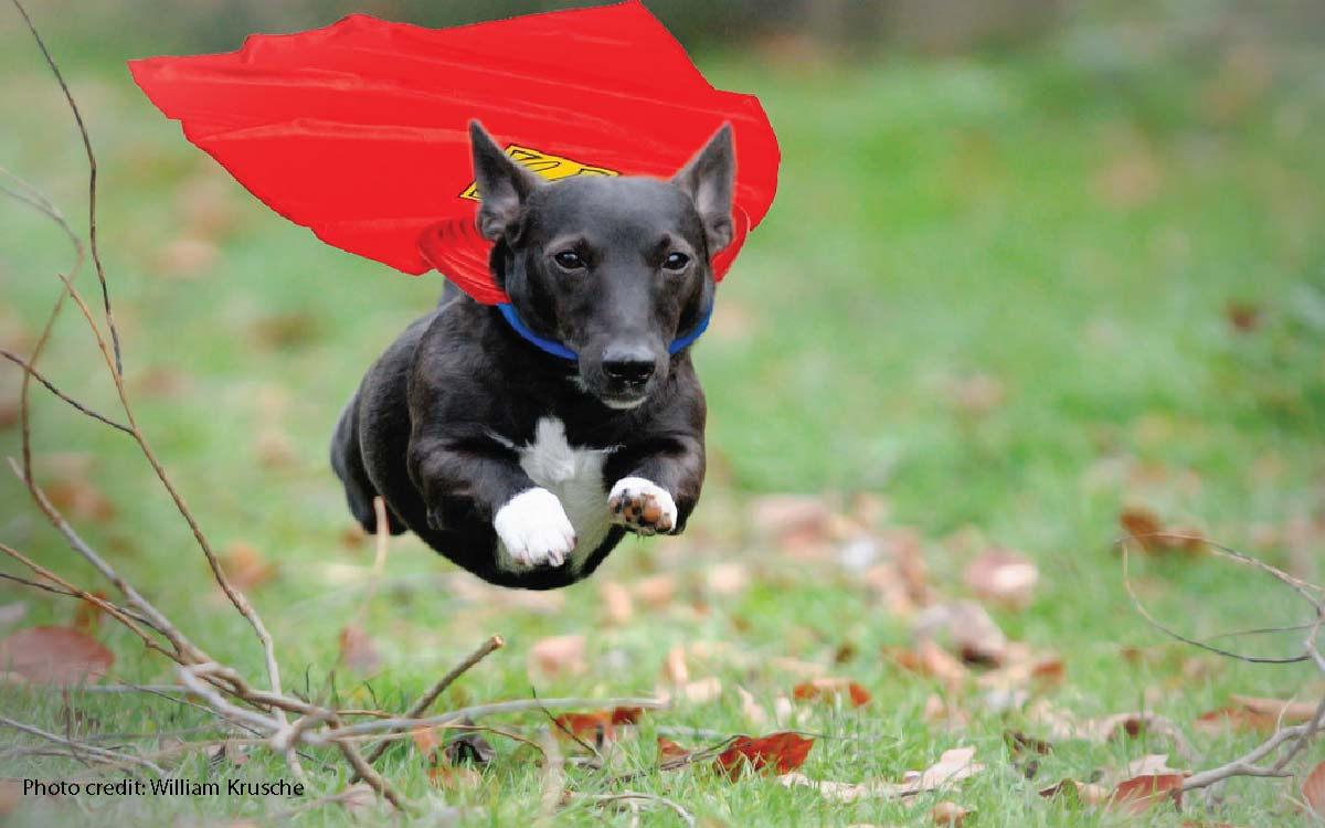 Dogs Just Want To Be Super Heroes