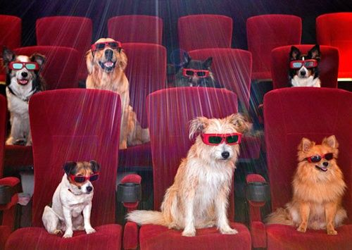 Quiz: Can You Name the Dog in Each of These Blockbuster Movies?