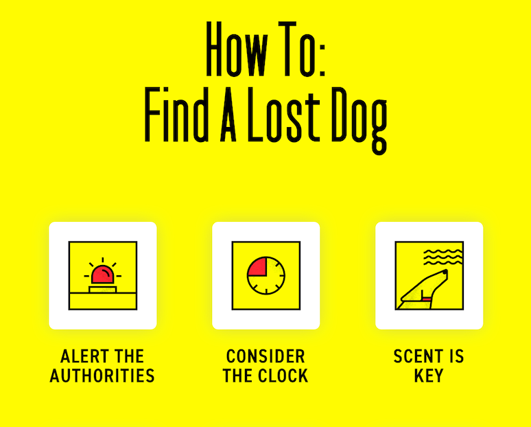 How To Find A Lost Dog Quickly