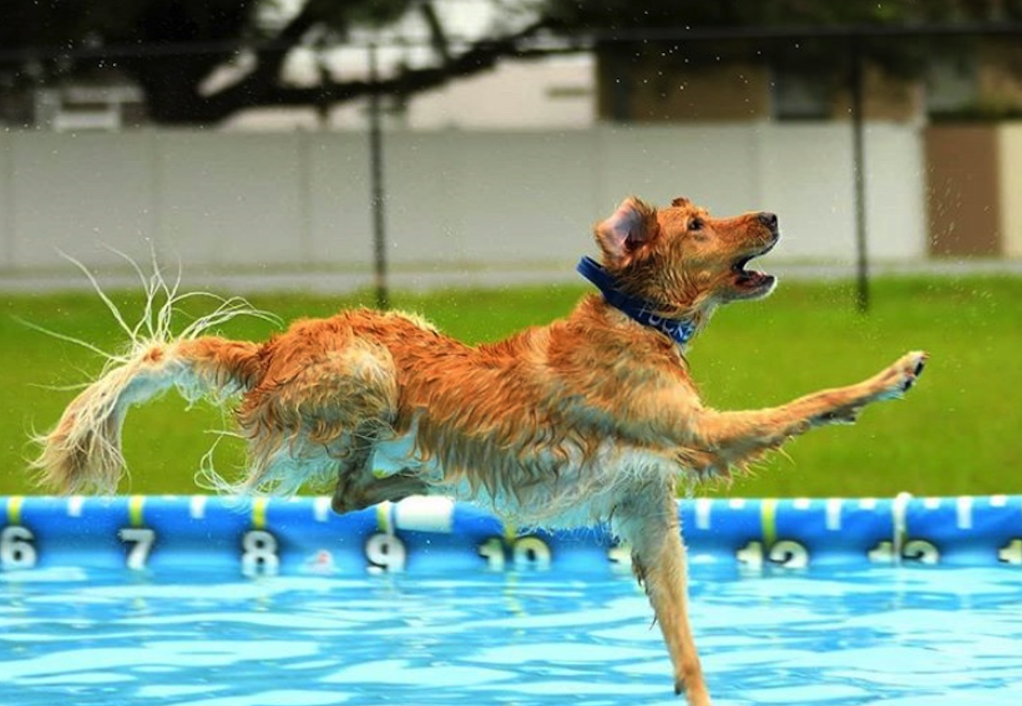How Can I Get My Dog Comfortable In Water?
