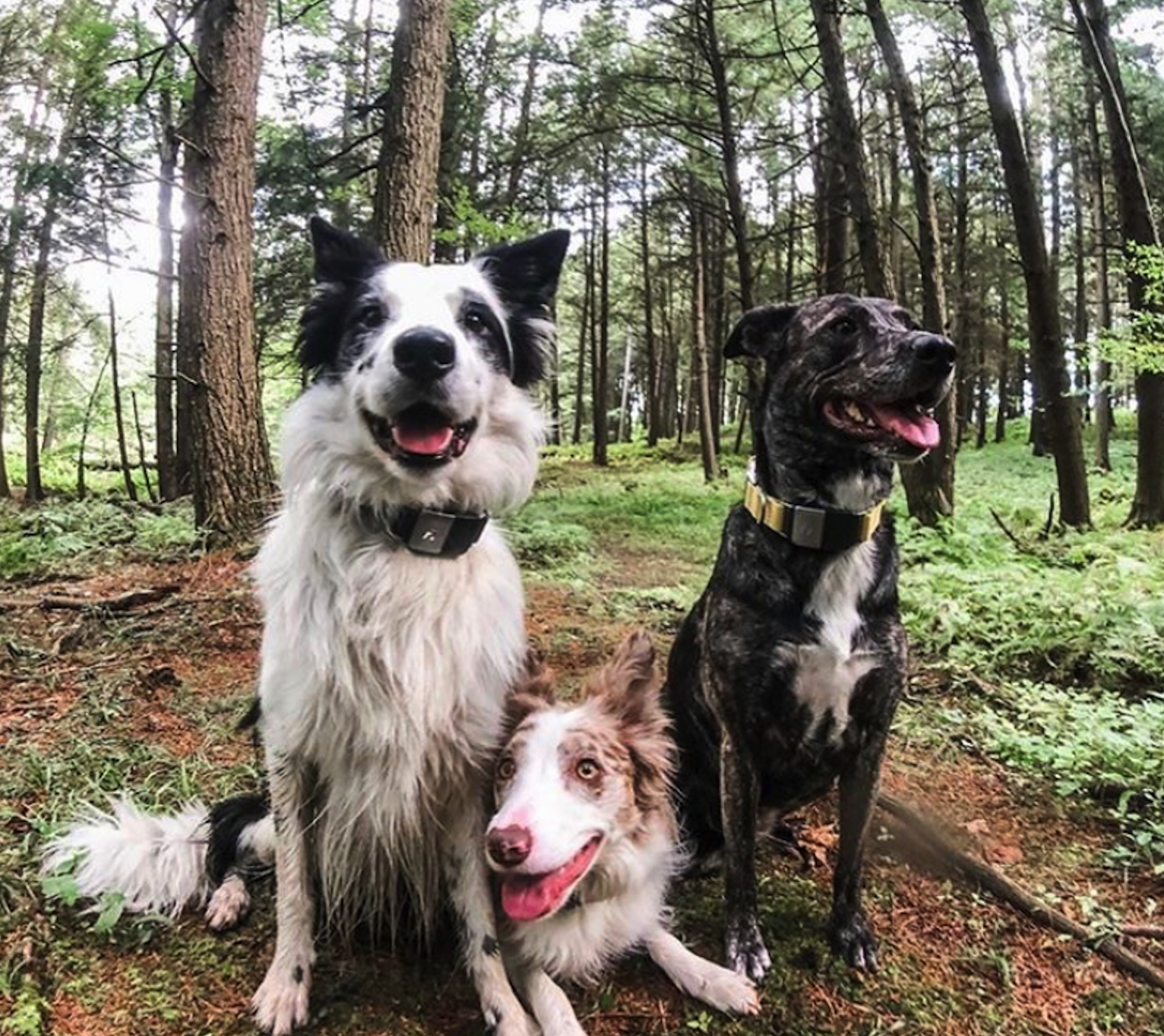 5 Dog Friendly Hikes You Need To Take