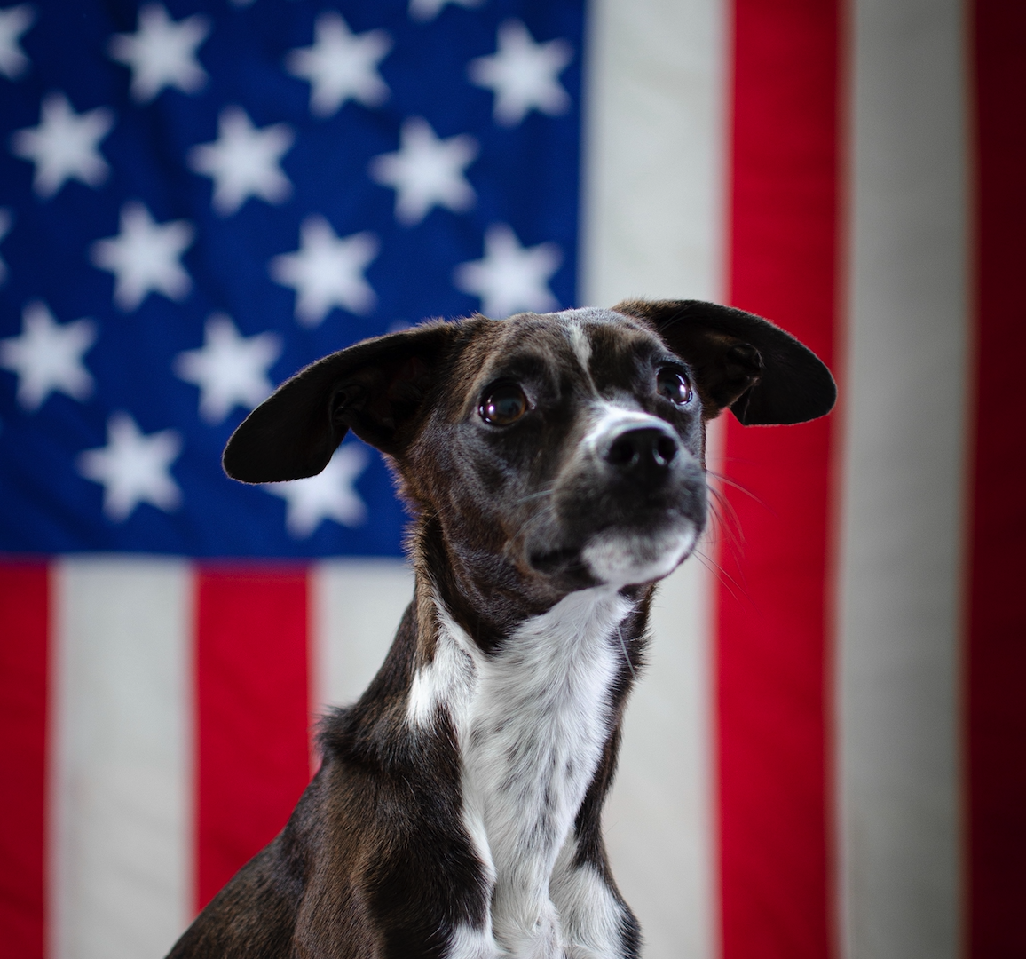 What Your Dog Says About Your Political Affiliation