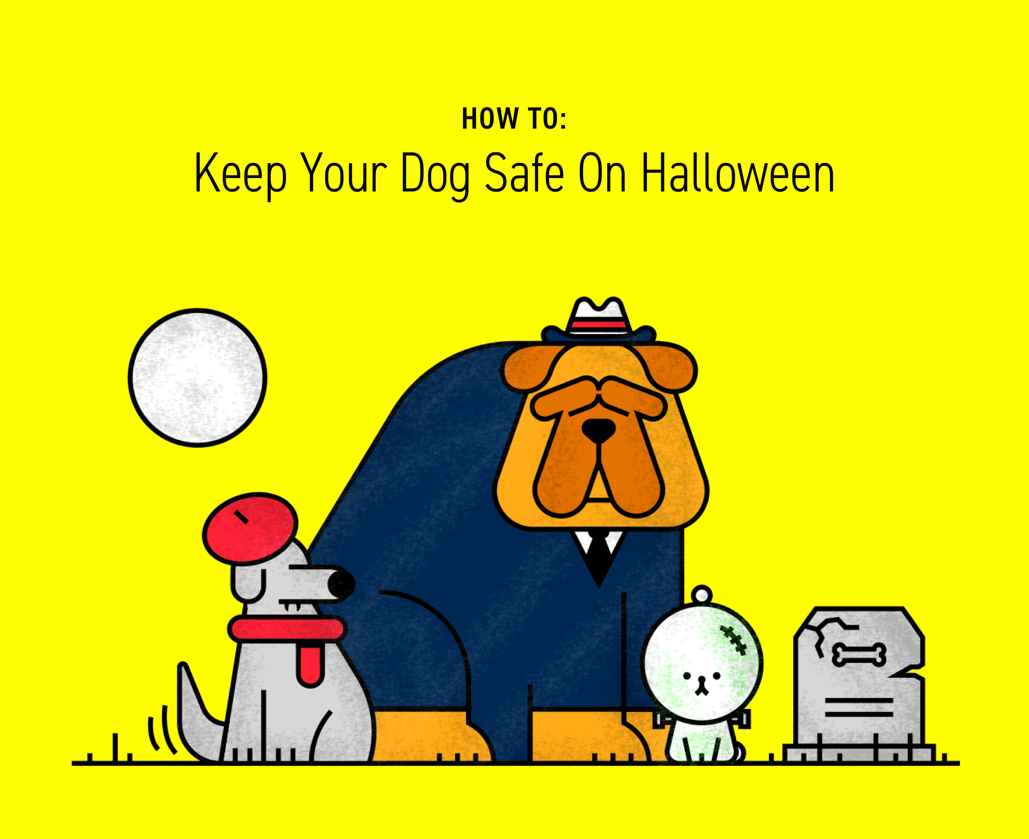 Ask Dr. Jeff: How Can I Keep My Dog Safe This Halloween?