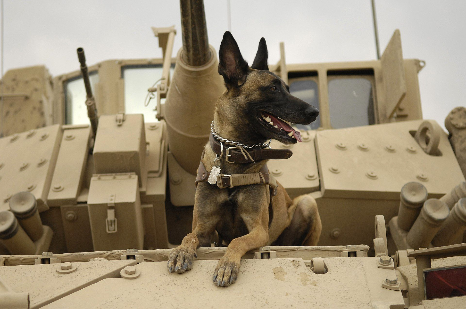 A Brief History Of Dogs In The Military