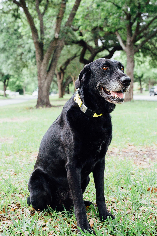 Why You Should Consider Adopting A Senior Dog