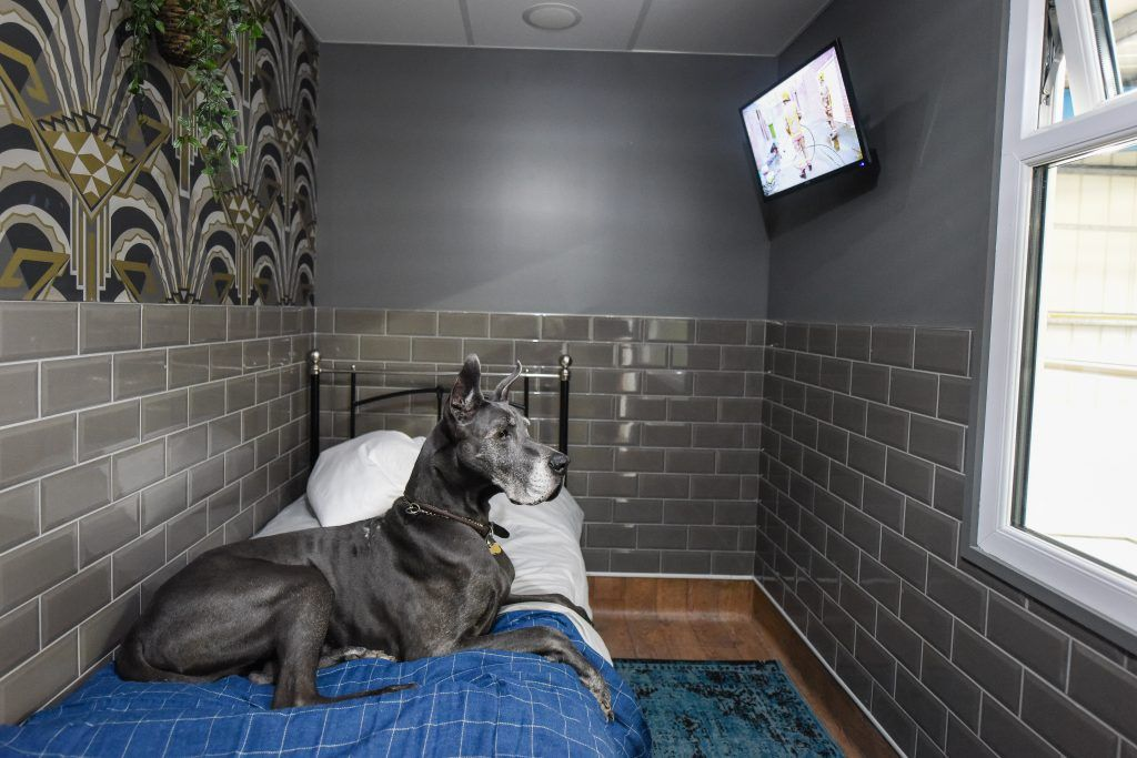 10 Of The Most Luxurious Dog-Friendly Airbnbs In America