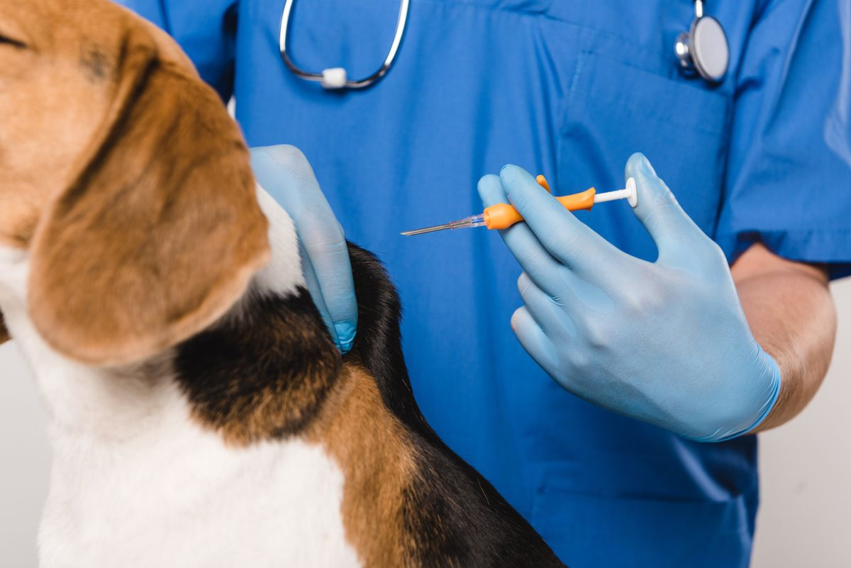 Microchipping 101: Ask Dr. Jeff