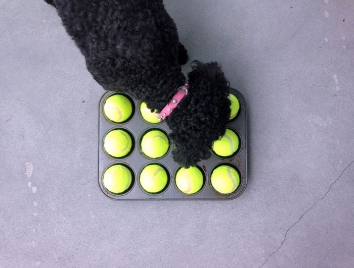 5 Brain Games To Play With Your Dog This Week
