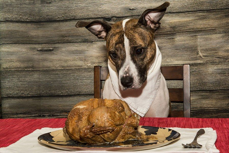 What Bones are Safe for Dogs to Eat? Thanksgiving Edition