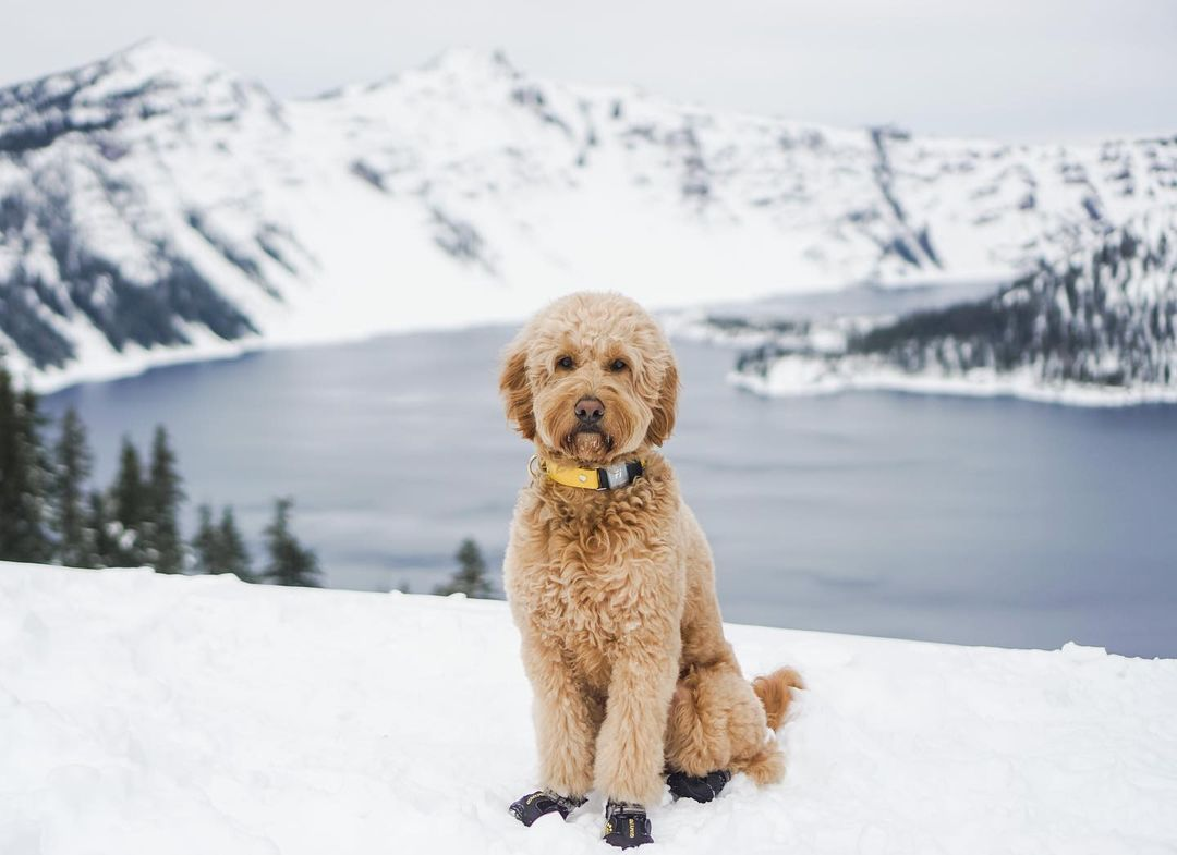 Winter Activities To Do With Your Dog