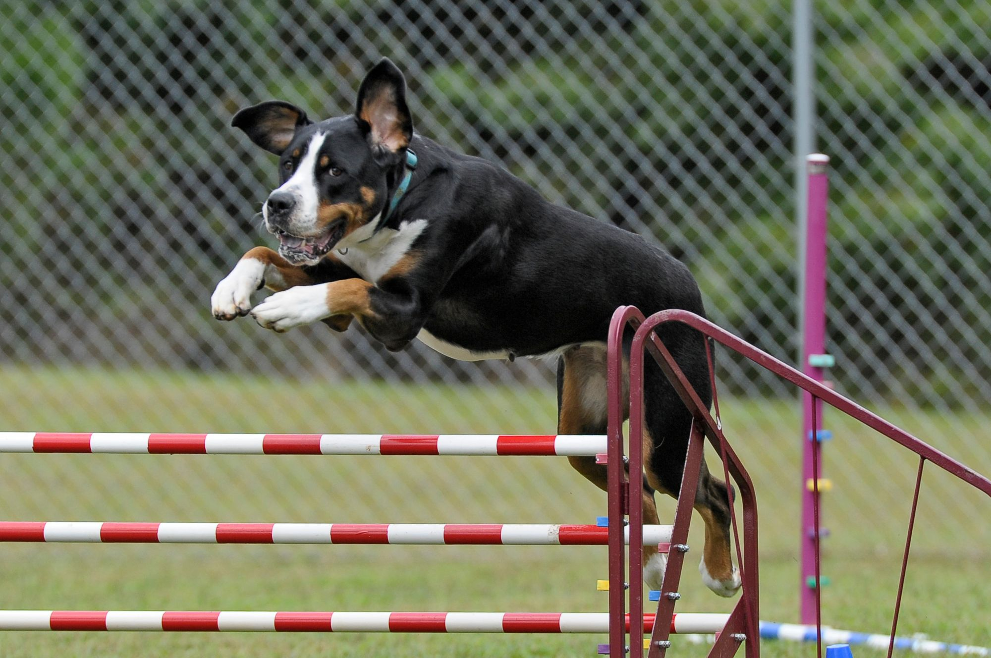 How To Make An At-Home Agility Course