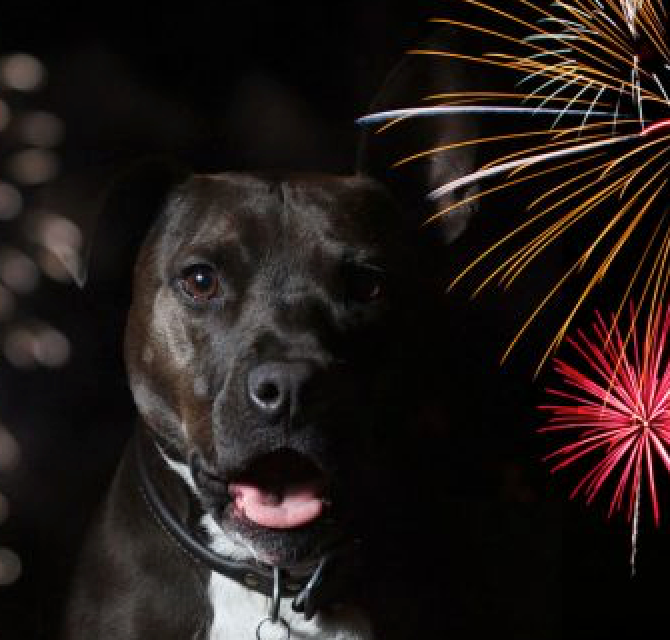 Fireworks Safety: Keeping Your Dog Calm This NYE