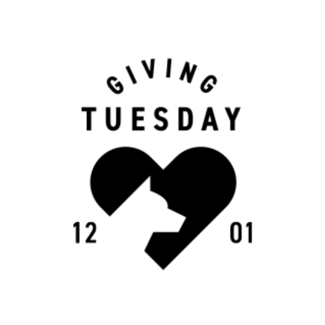 How Fi Celebrates Giving Tuesday