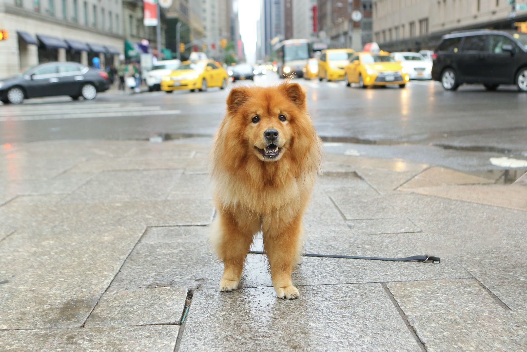 Walk Your Pet Month: America's 5 Most Dog Friendly Cities