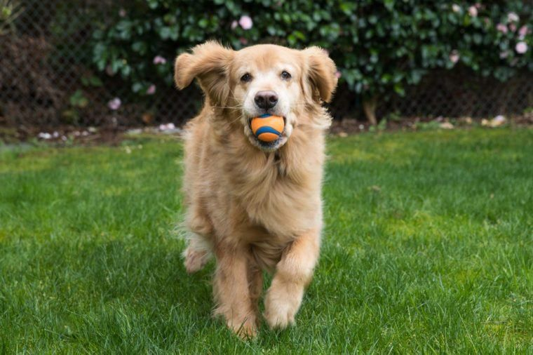 How To Teach Your Dog To Play Fetch (And Actually Bring It Back!)