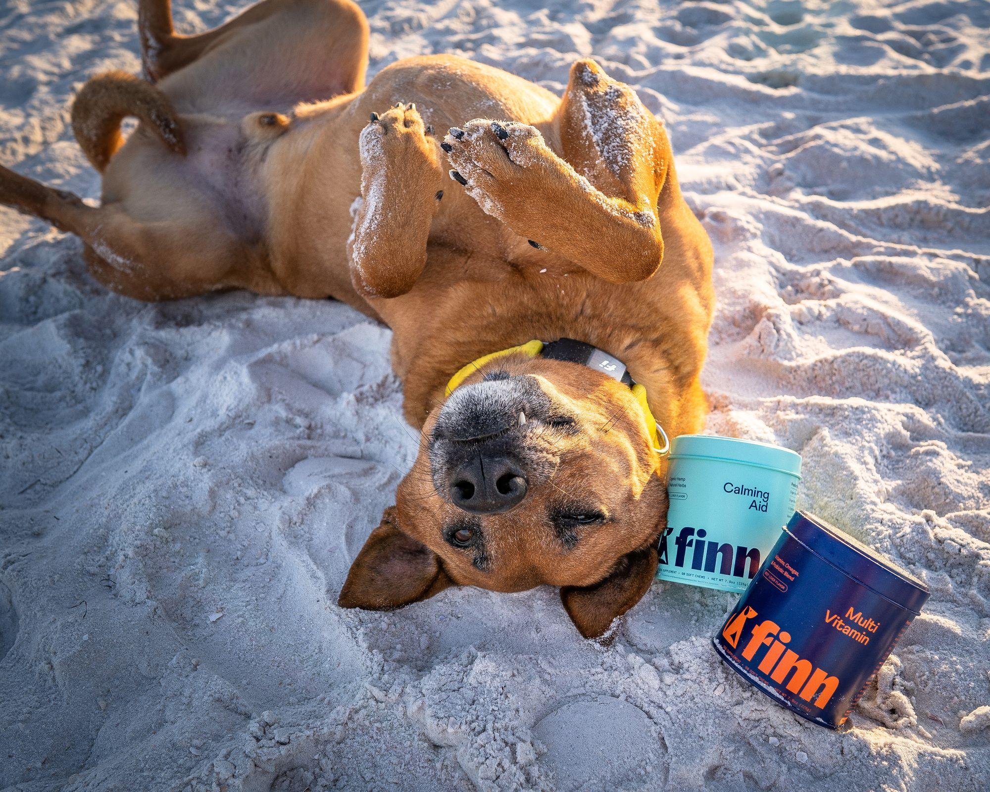 fi collar, dog with probiotics, probiotics for dogs