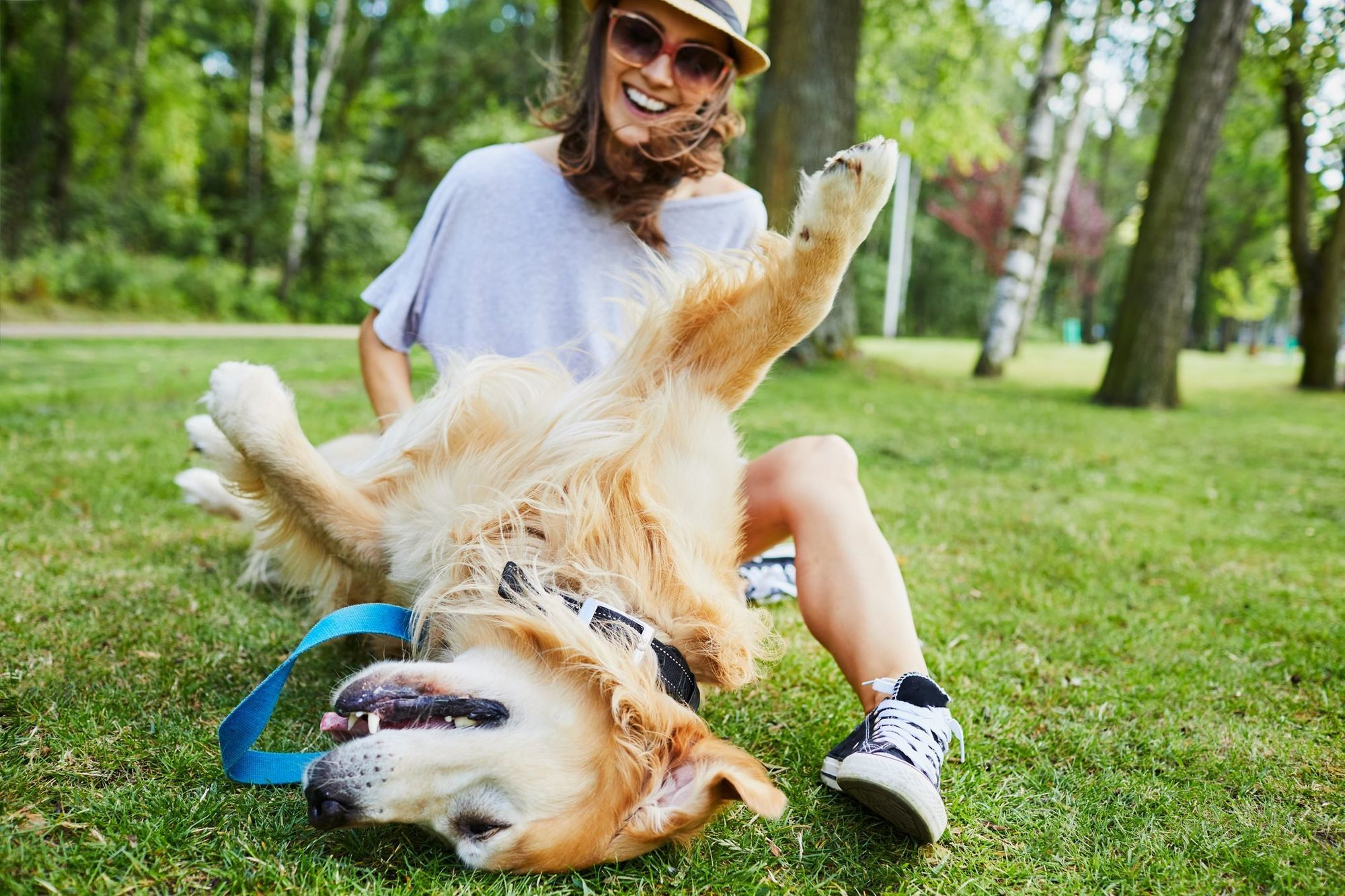 Why Do Dogs Like Belly Rubs?