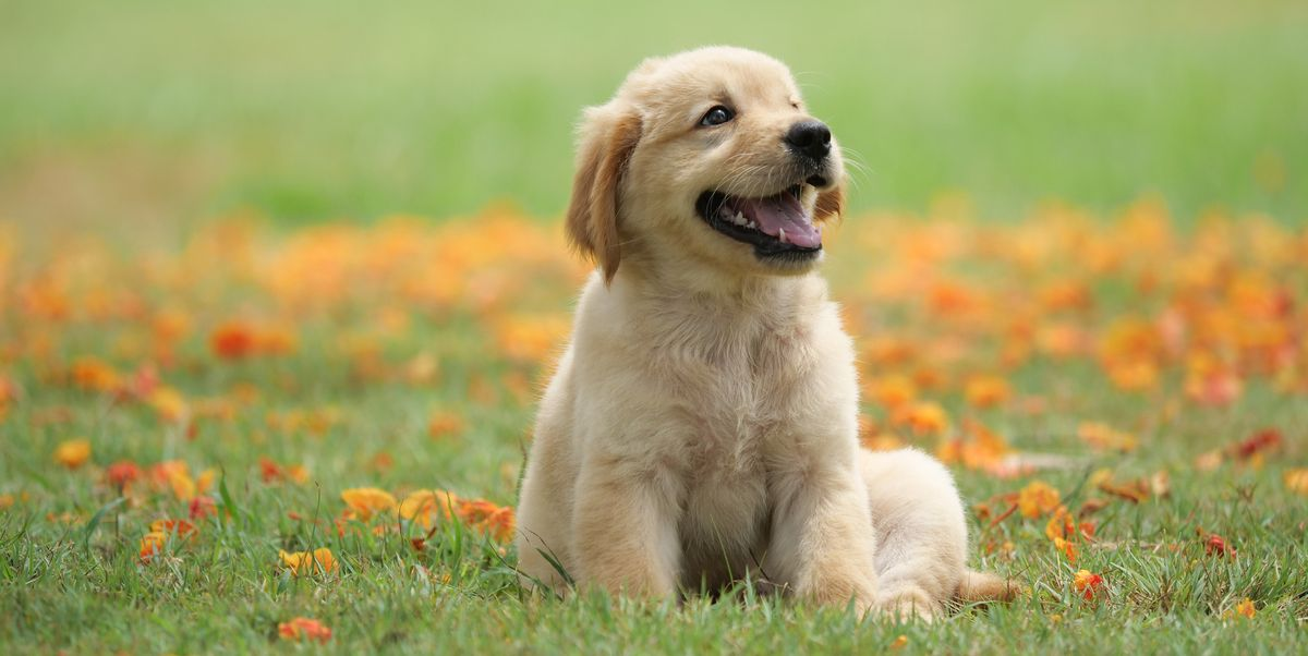 Dog Names That Start With S - Top 130+ Names For Your Next Dog