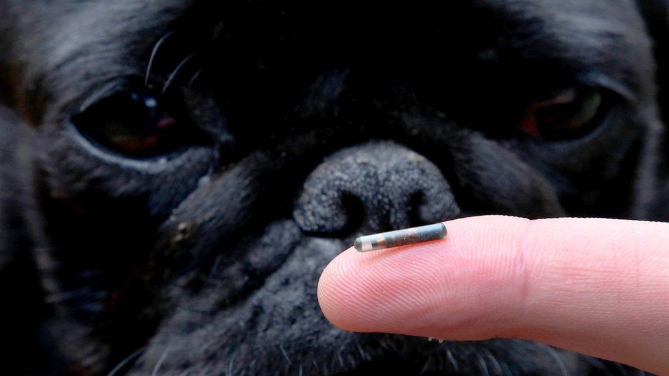 How Much Does It Cost To Microchip A Dog?