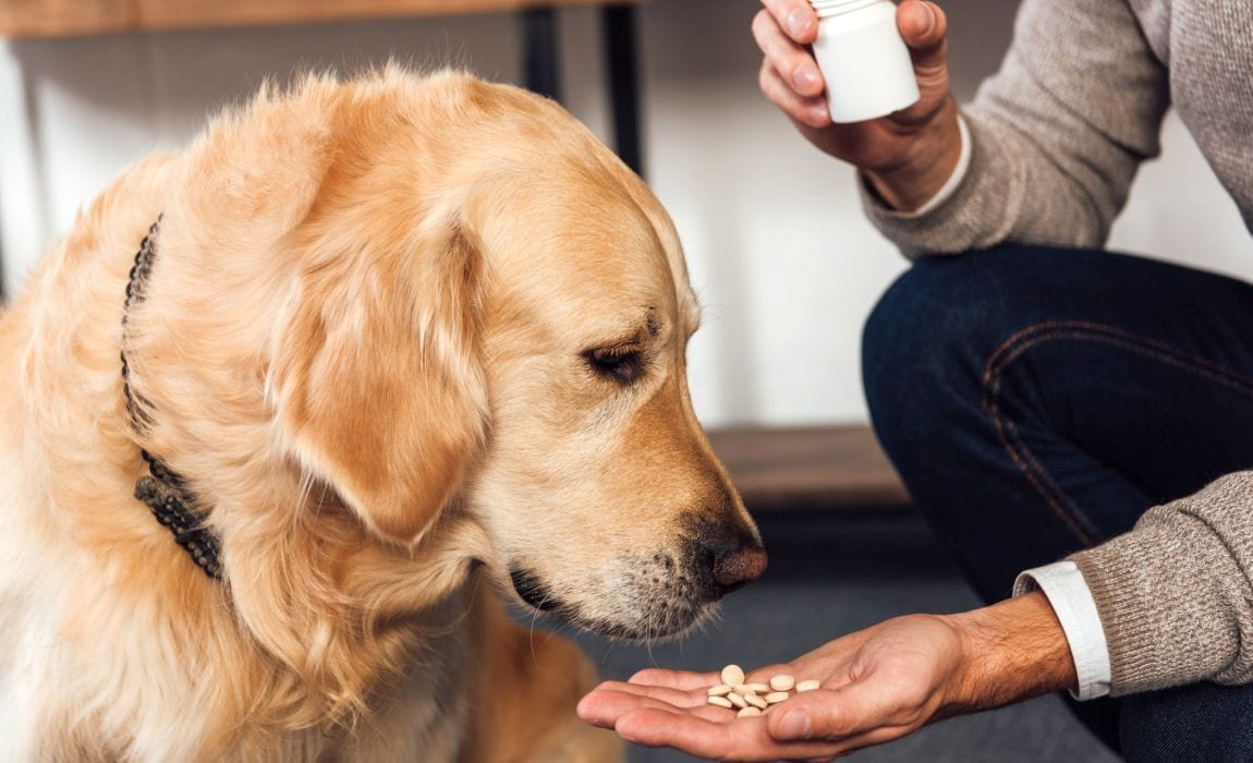 Which Over-The-Counter Medicines Are Safe For Dogs?