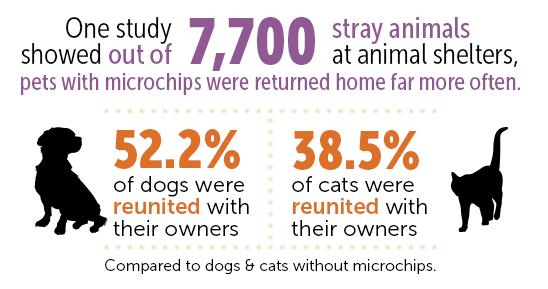 dog microchip, microchip statistics, lost dog
