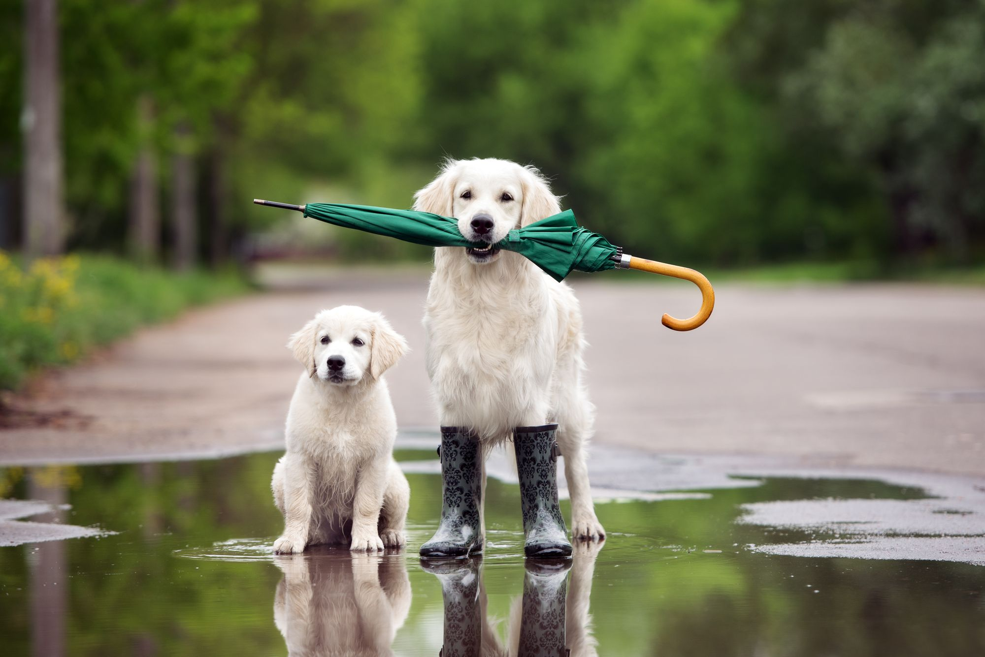 Rainy Day Activities For Dogs