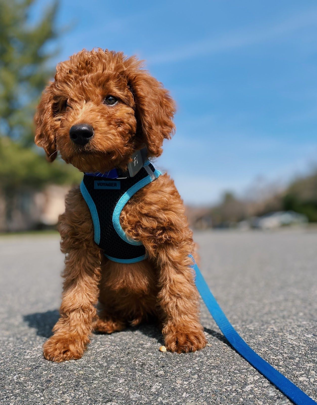 Do Puppies Breathe Fast?