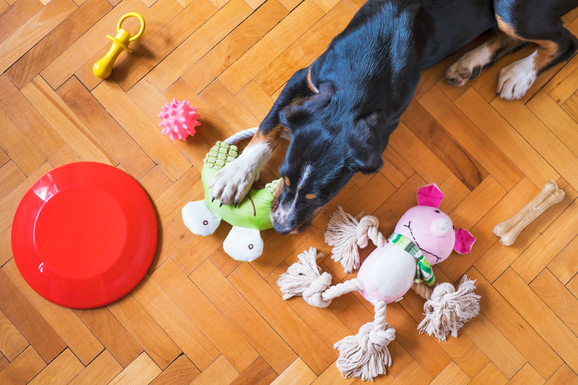 Spring Cleaning 101: Dog Items You Might Be Forgetting To Clean and How To Clean Them