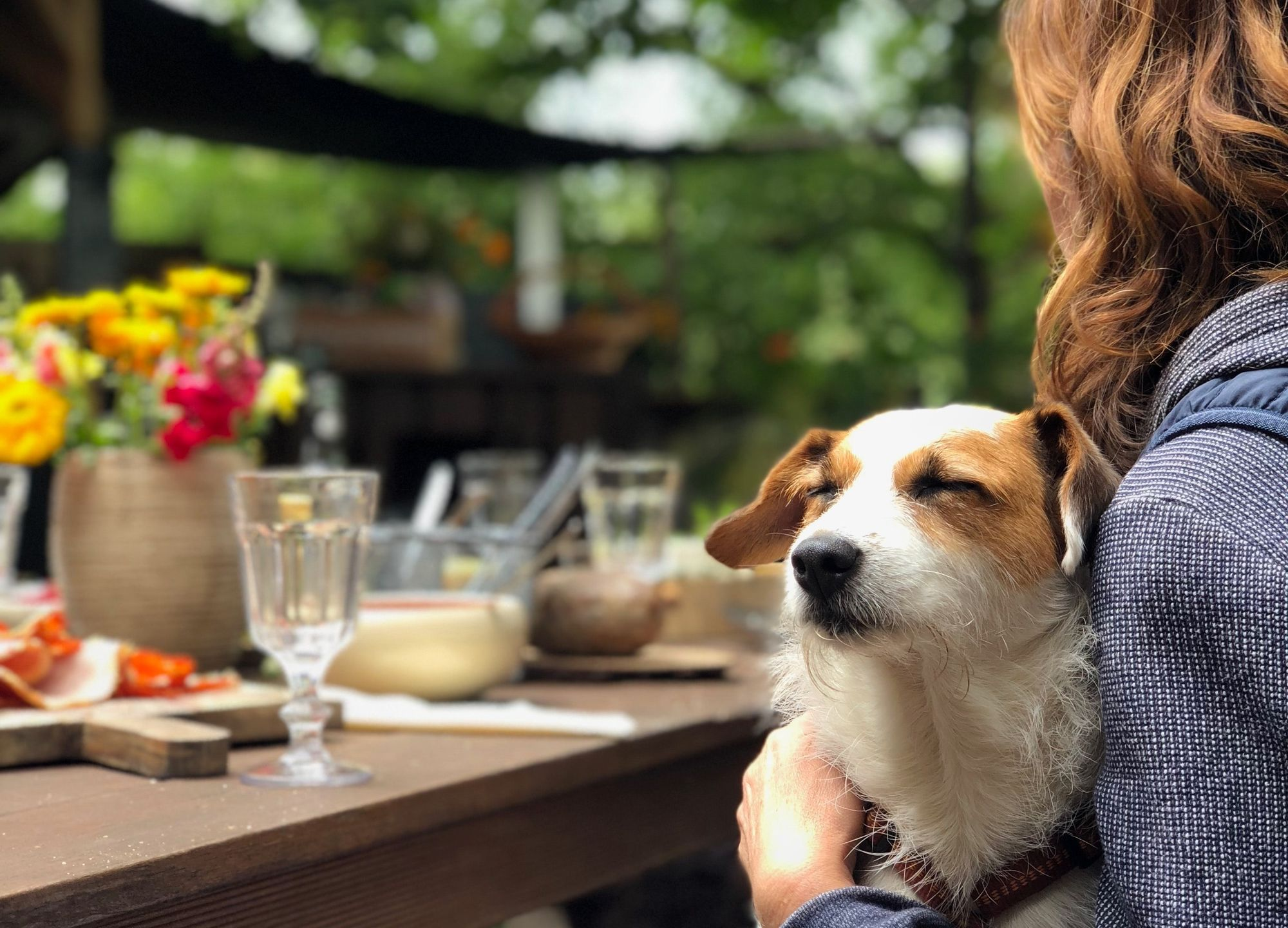 Dog-Friendly Things to Do in Austin, TX