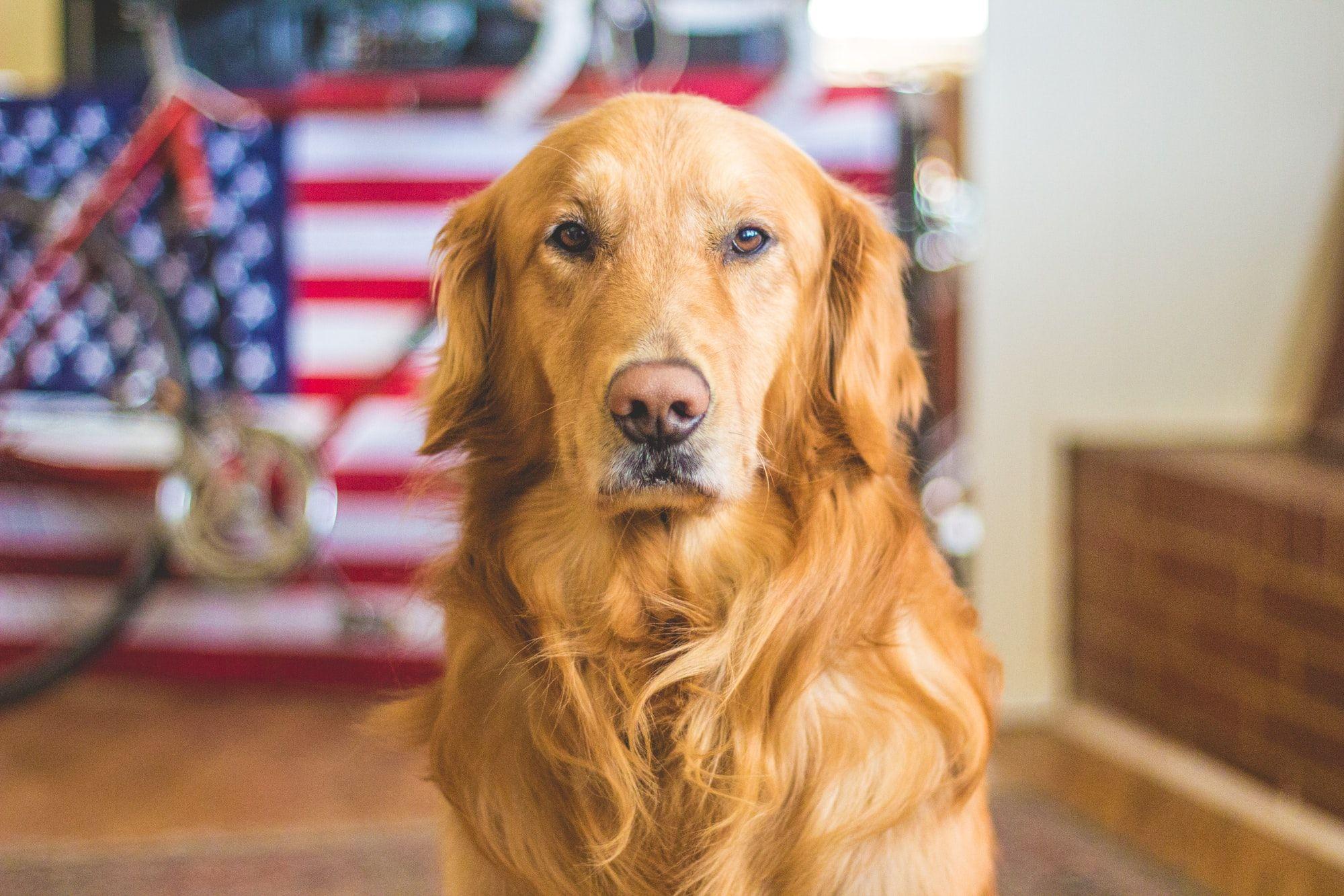 Memorial Day Dog Treat Recipes