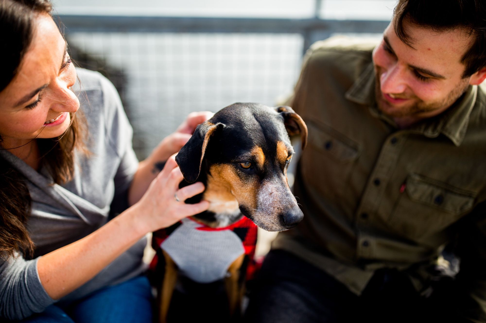 Tips From Rescues for Pandemic Puppies