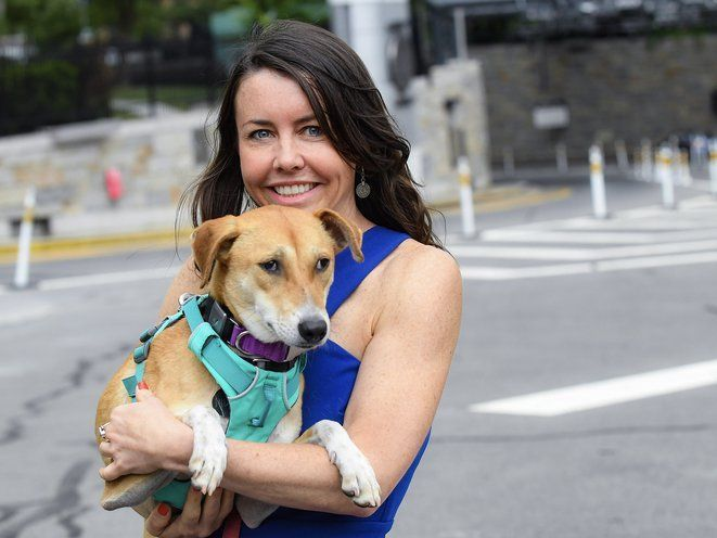 Fi in the News:  Escaped Upper West Side Dog Gets Fi Collar