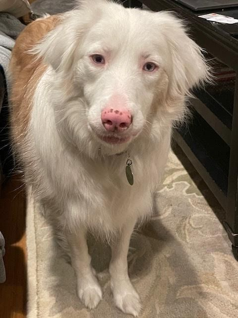 Fi in the News: Missing deaf dog reunited with family thanks to GPS collar